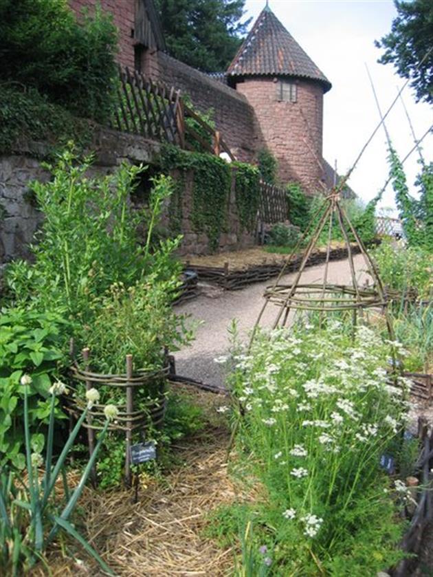 Jardin médiéval du château du Haut-Koenigsbourg