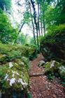 sentier d'accès de la Grotte des Nains de Ferrette