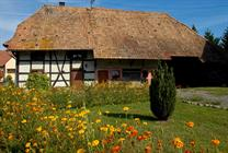 Maison Sundgauvienne ©Guy-Buchheit