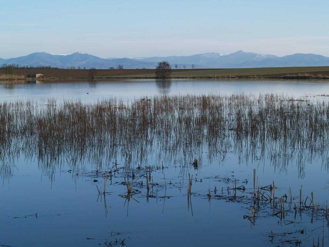 The Nérac Ponds