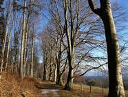 Allée des hêtres, Winkel, Jura alsacien