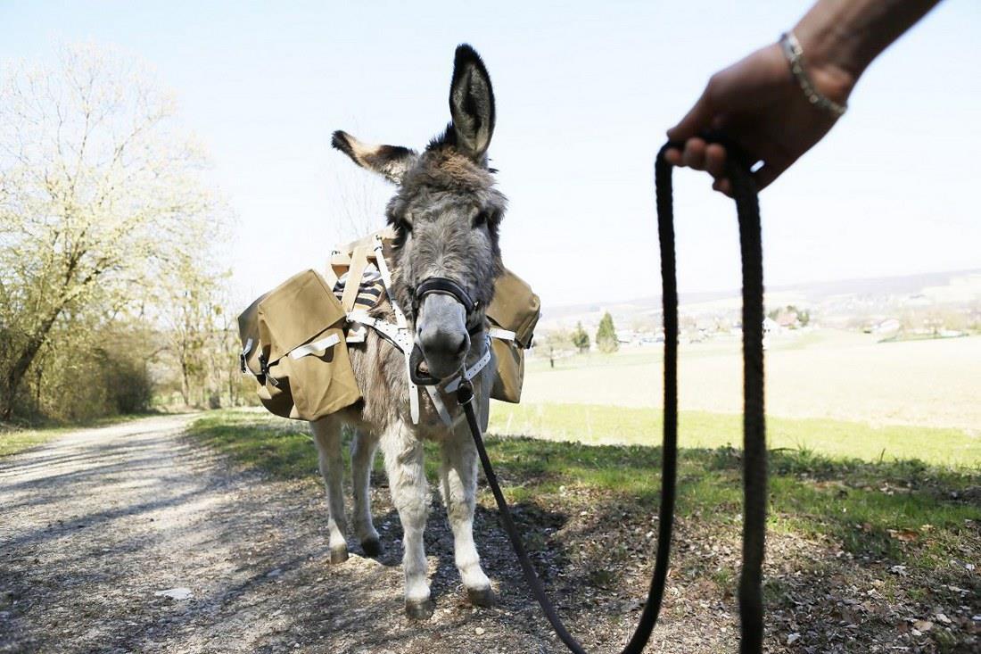 Randonnée avec les ânes de la ferme du Luppachhof