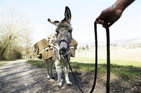 L'âne Pepito de la ferme du Luppachhof