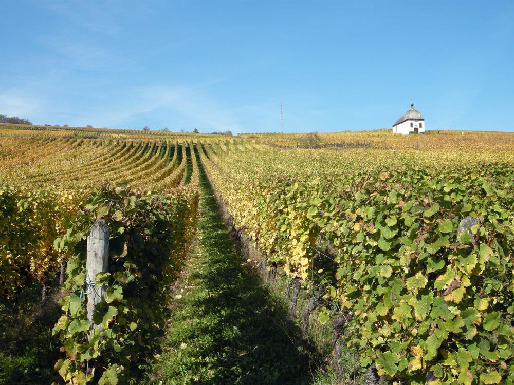 BL921 - Le Vignoble du Roi Dagobert