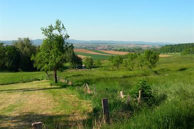 Du pays de Hanau aux Vosges du Nord