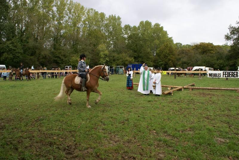 Pferde fest