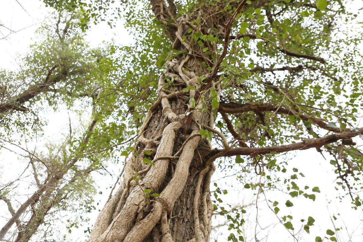 Quand la nature reprend ses droits - crédit photo : Vincent Muller