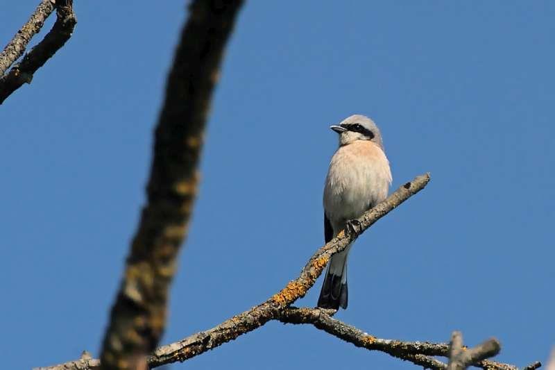 Visite guidée - le retour des oiseaux migrateurs