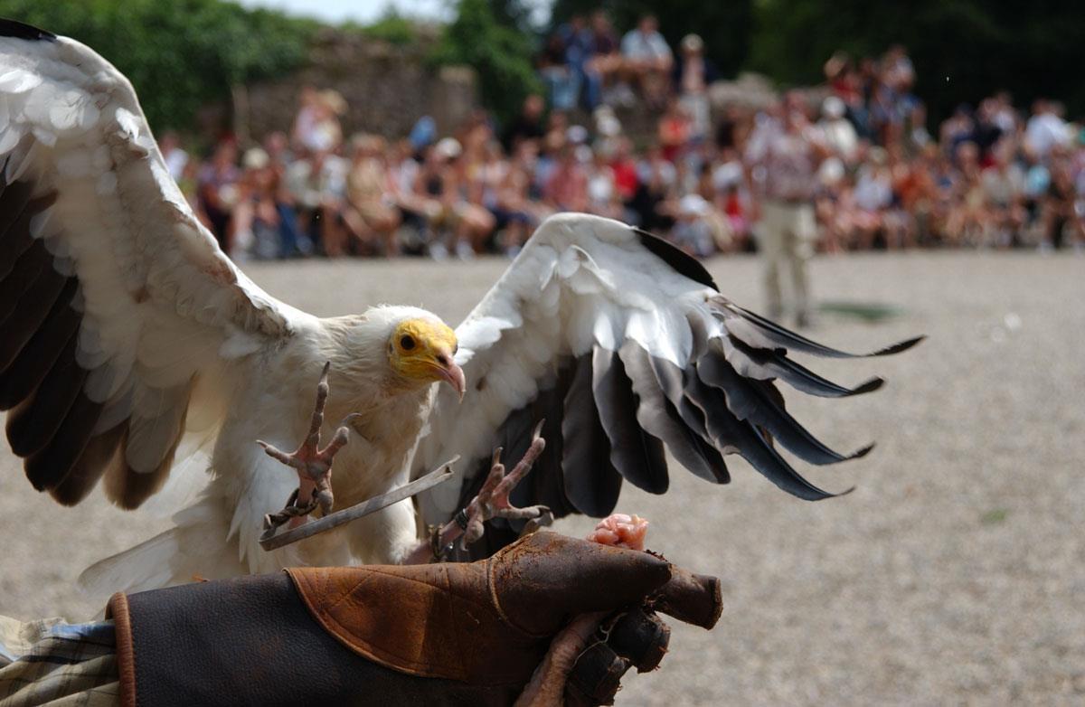 Vente de billets Volerie des aigles