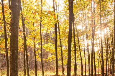 La Forêt d'Exception® de Haguenau - N°8 : Petit circuit du Stocklach