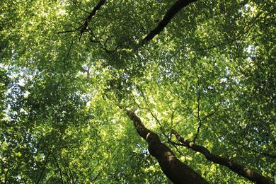 La Forêt d'Exception® de Haguenau - N°7 : Le grand circuit du Stocklach