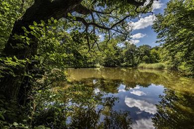 Les étangs de Gründel en Forêt d'Exception®