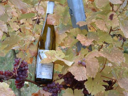 Vins Kaes à Molsheim