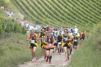 Marathon du vignoble d'Alsace - ANNULE