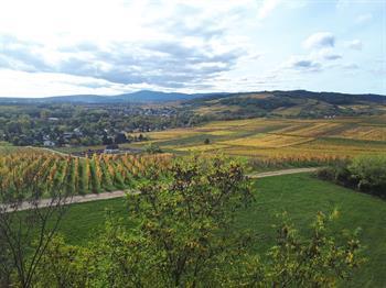 Sentier viticole de Wolxheim