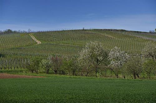 La Chartreuse - crédit photo G. Oswald