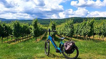 Balade à vélo éléctrique et dégustation dans les vignes