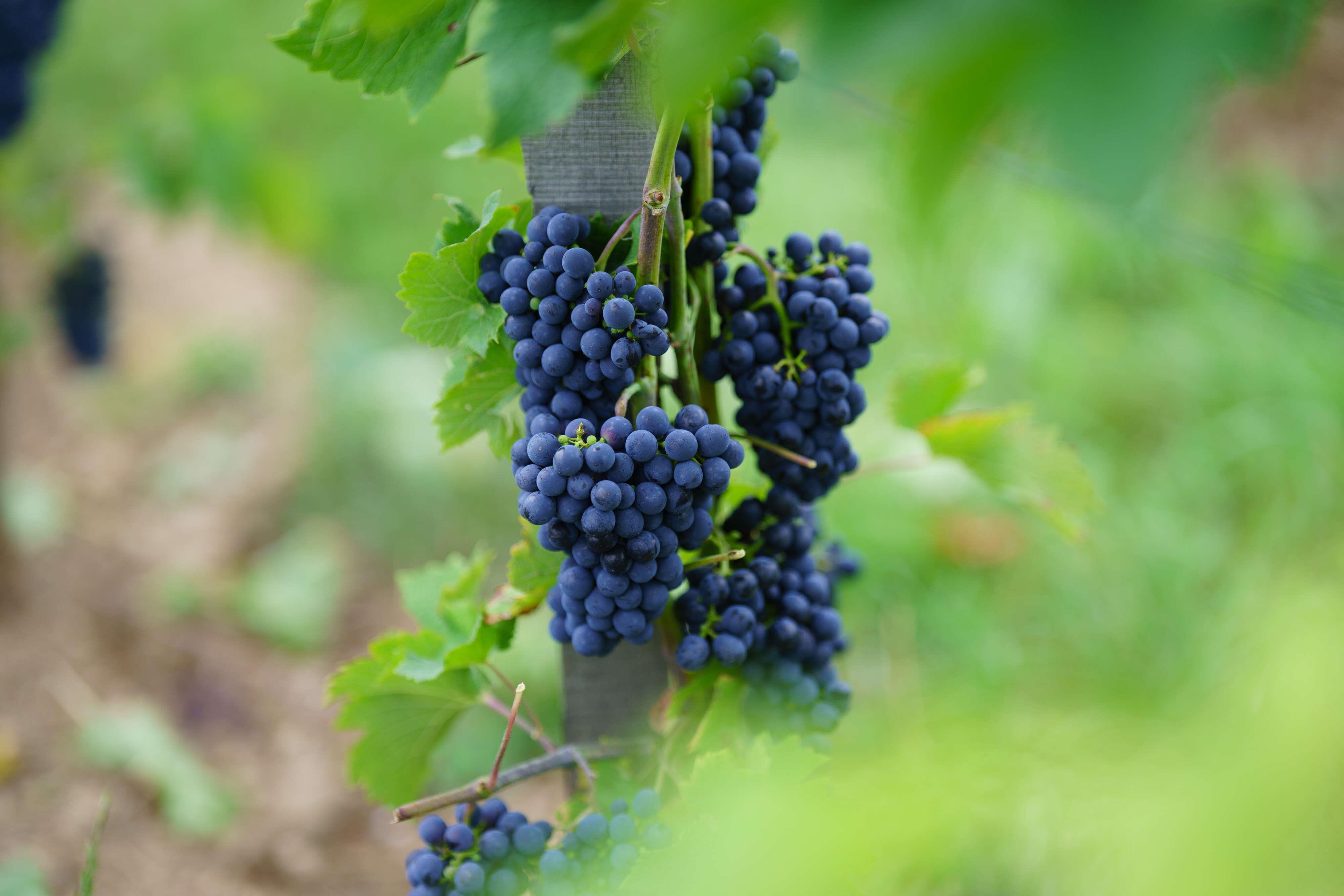 Domaine Jost