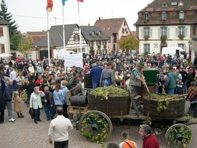 Grape-harvest festival