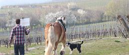 À cheval au fil des vignobles et de la forêt