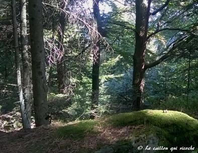 Méditation de pleine conscience dans la nature