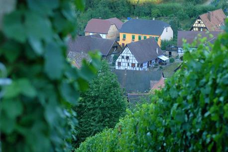 Picnic in the vineyard of Albé