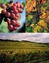 Vins Domaine Joseph Gross