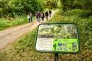 Visite guid�e p�destre : attendez-vous � l'inattendu dans la petite jungle de l'Ile de Rhinau