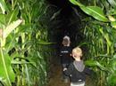 Labyrinthe de ma�s � la ferme Kieffer