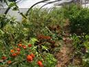 Visite des jardins en permaculture et agro �cologie