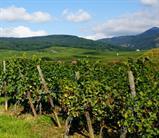 Exposition : La Vigne en Val d'Argent