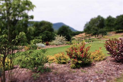 Garten Lilaveronica