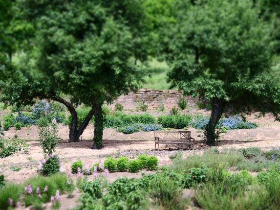 Jardin Lilaveronica
