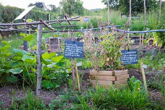 Atelier jardin sauvage