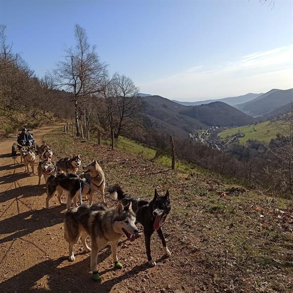 Manouk Evasion - Sled dog ride