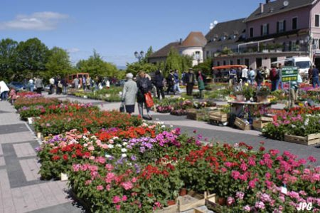 Blumenmarkt altkirch - Office du tourisme altkirch ...