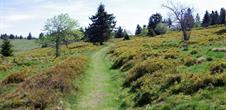 Circuit de randonnée n° 8 : La Chaume des Veaux