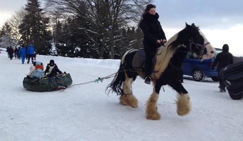 Horse-tubing avec Cheval Alsace au Champ du Feu