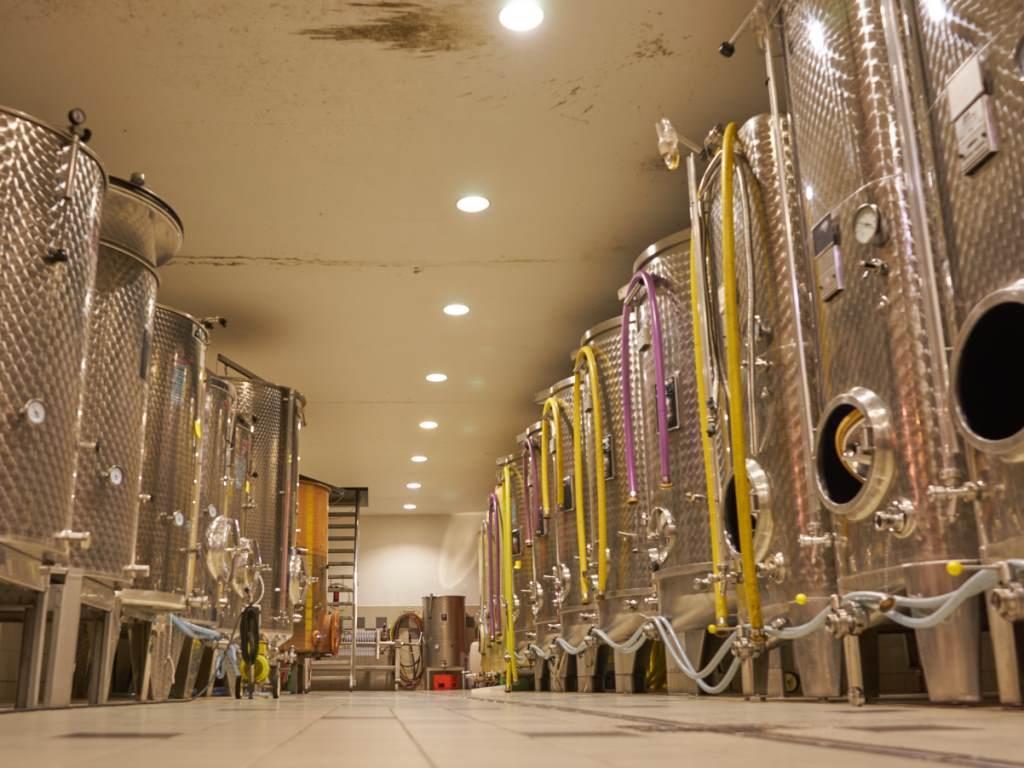 vins wach guy - domaine des marronniers