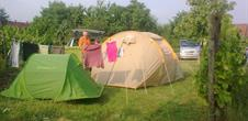 Camping Palmer Aire naturelle