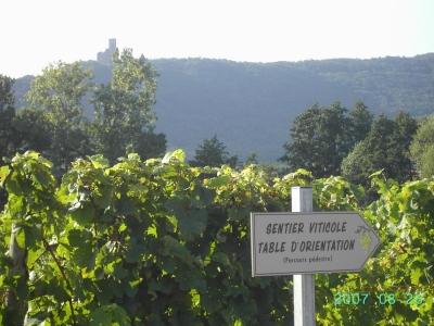 """Visite guidée du sentier """"Murailles et Vignes"""""""