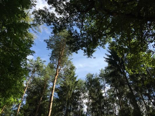 Balade sensorielle, se ressourcer au contact des arbres