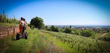 Oenotourismus - Segway dans le vignoble alsacien