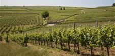 Walk: the Bildstoeckle vineyard