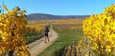Circuit de randonnée ou de trail : tour du Bollenberg