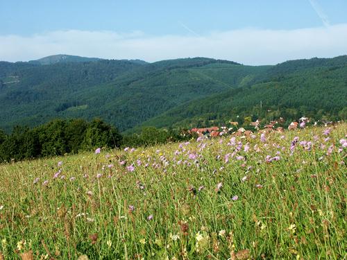 Osenbach, Pays de Rouffach, Vignobles et Châteaux, Haut-Rhin, Alsace