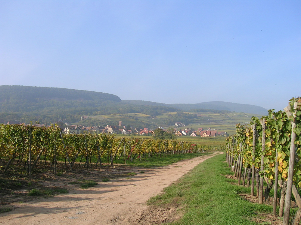 La promenade du Grand Cru Goldert, Pays de Rouffach, Vignobles et Châteaux, Haut-Rhin, Alsace