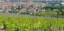 The Grand Cru Vorbourg walk