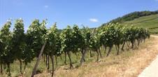 Sentiers viticoles