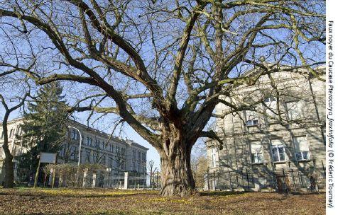 Histoires d'arbres, rencontre scientifique par Frédéric Tournay